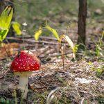 Грибы Башкирии съедобные весенние, летние, осенние виды, сроки и места сбора, описание несъедобных
