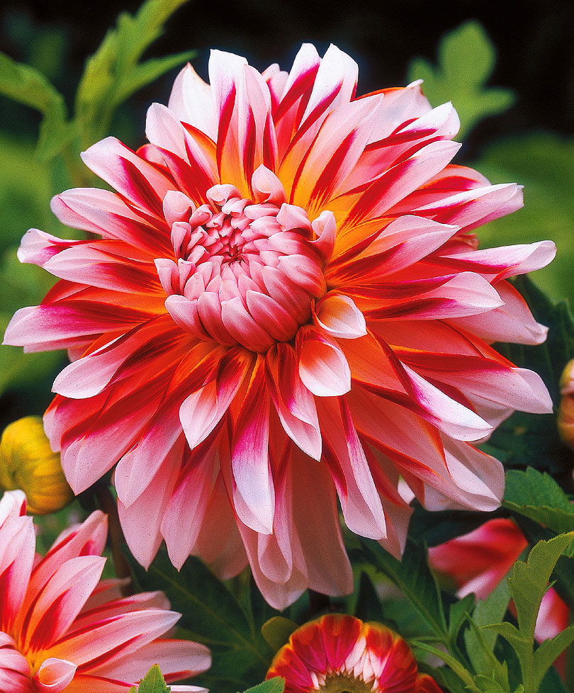 если хотите картинки самые популярные цветы является