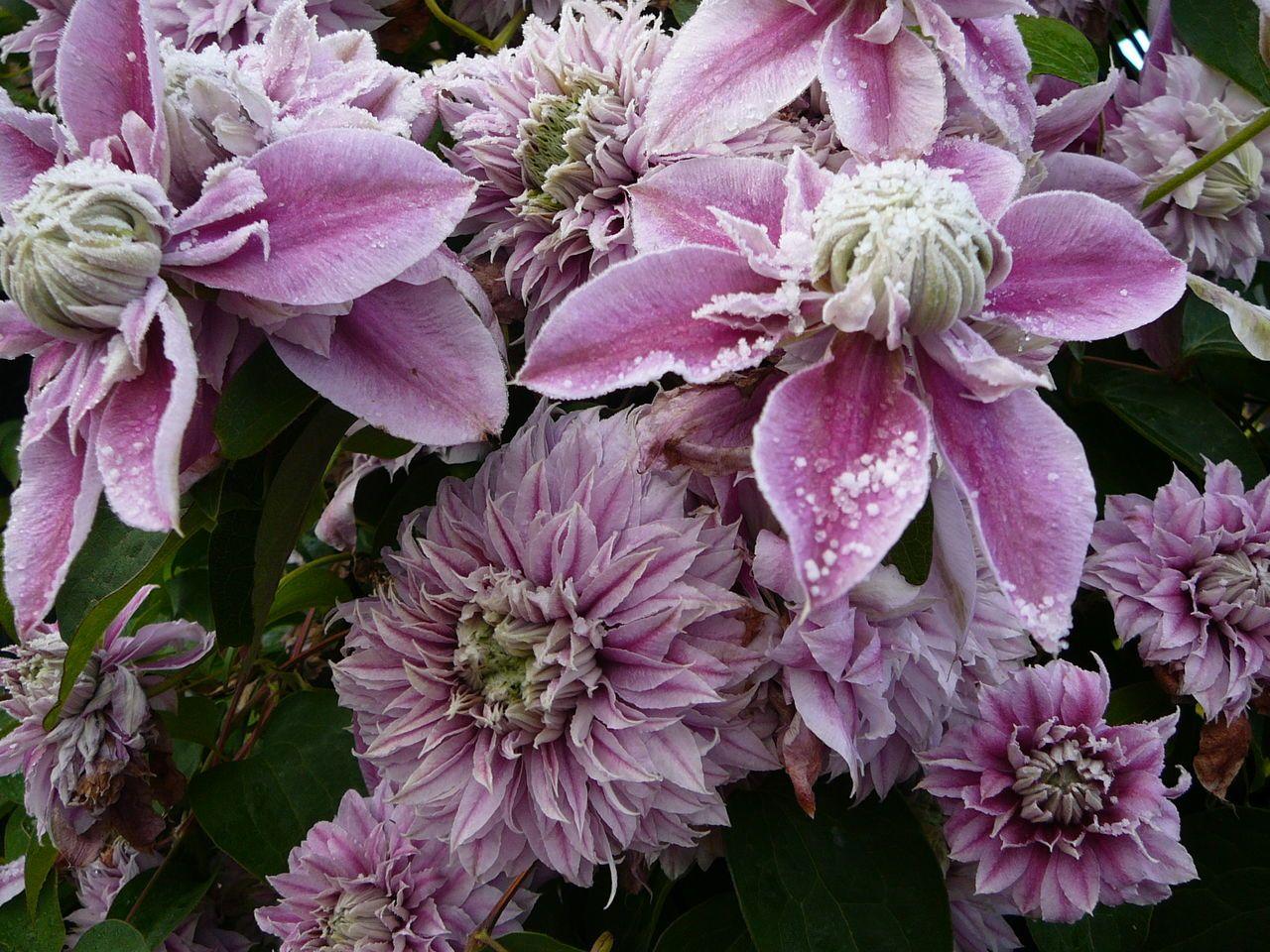 Какие цветущие цветы посадить на даче чтобы цвели все лето фото