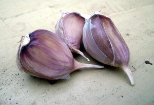 Как вырастить хороший урожай озимого чеснока?