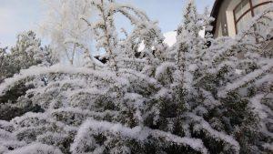Как правильно подготовить сад к зимнему периоду?