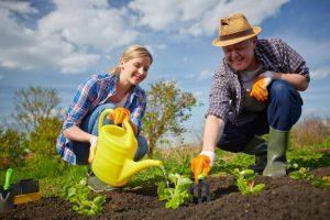 Май: работы в саду, огороде и цветнике
