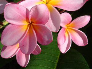 Тест: Знаете ли вы эти экзотические цветы?