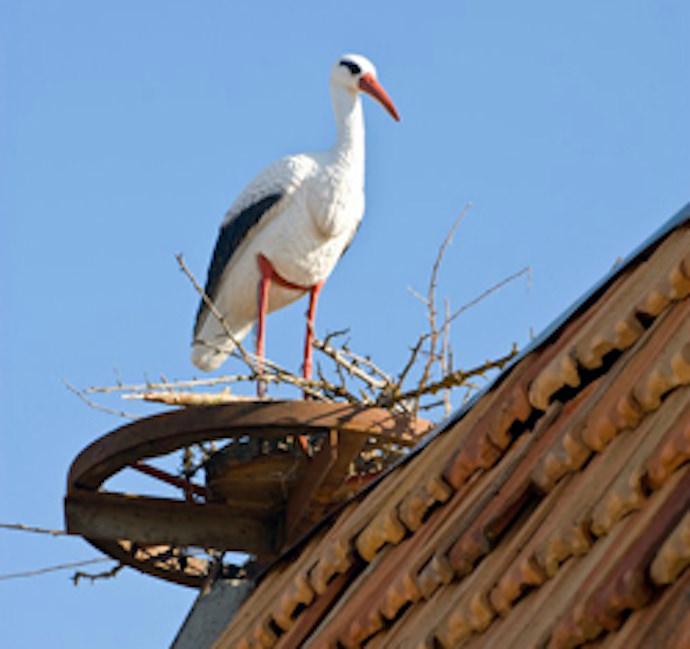Как сплести из веток гнездо для аиста