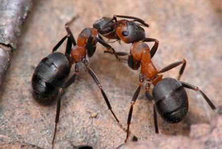 Как бороться с насекомыми при помощи растений