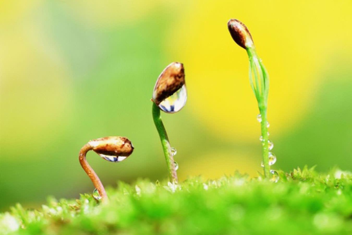 Безземельный способ выращивания рассады