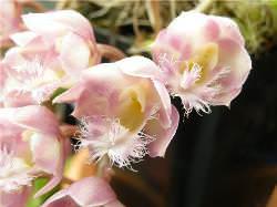 Некоторые виды орхидей могут иметь необычную окраску и внешность