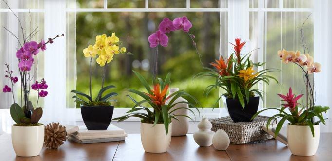 Правильный выбор емкости обеспечит орхидее рост в комфортных условиях и хорошее развитие