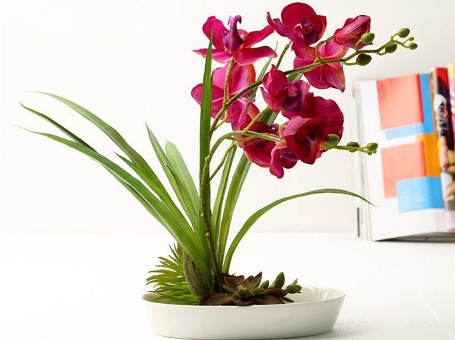 Выбрать кашпо не составит труда, однако следует обратить внимание на правильное расположение растения в нем