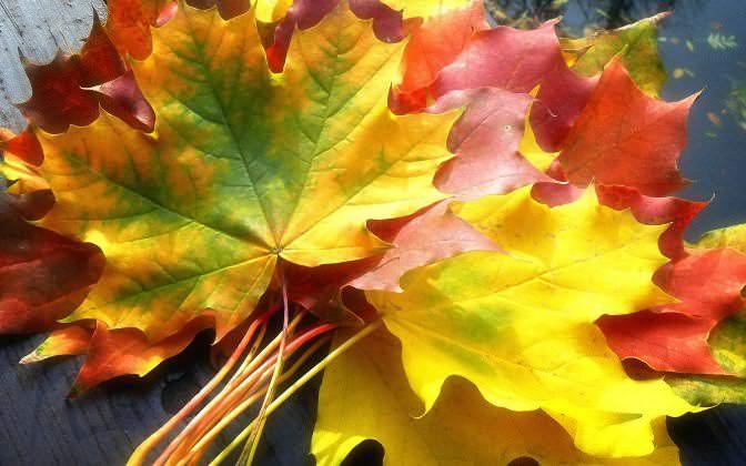 Сухие листья – материал гораздо более хрупкий, чем свежие, поэтому работать с ними необходимо очень аккуратно