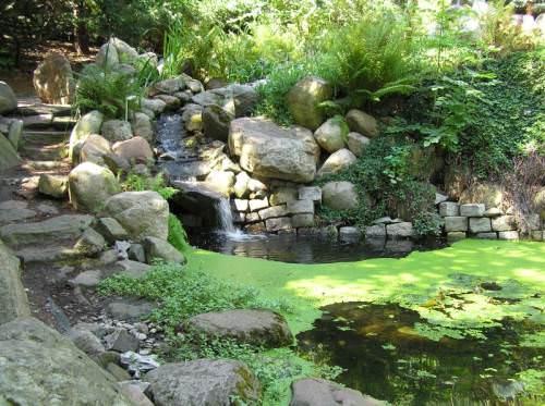Луковый сад выращиваем аллиумы  Ландшафтный дизайн