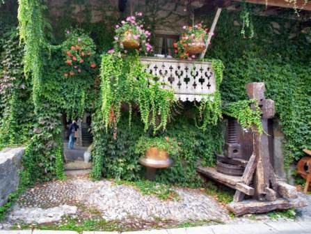 Ампельные растения для дачи и сада