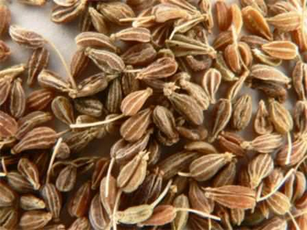 Семена аниса, ценная часть растения, и полезная для здоровья человека