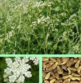 Для здорового растения, нужна рыхлая ухоженная почва