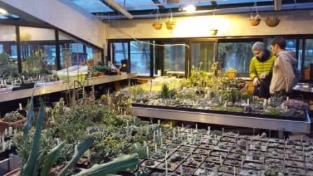 """26 ноября — долгожданное открытие оранжерейной экспозиции растений пустынь в """"Аптекарском огороде"""""""