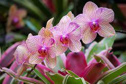 Паспорт по технологии для комнатного растения орхидея