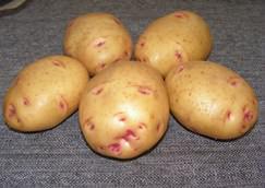 Картофель Барон: описание сорта
