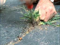 Как убрать траву перед посадкой огорода
