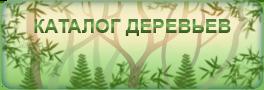 Каталог деревьев на ДачаДекор