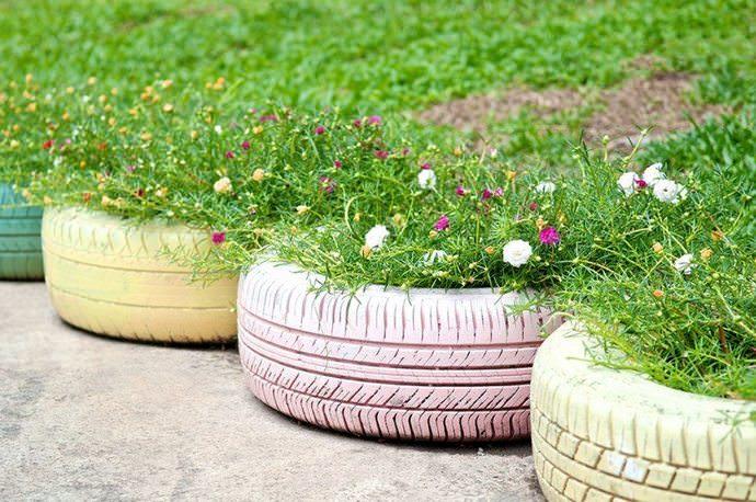 Высаживать в клумбы из автомобильных шин лучше цветы, которые будут радовать своим цветением весь сезон