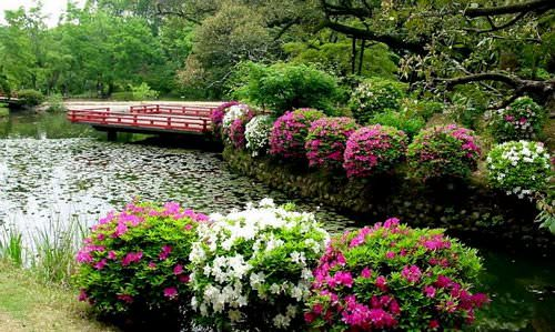 Самые популярные цветущие декоративные кустарники