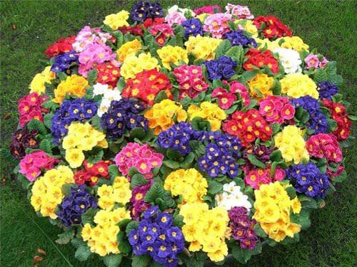 Выбираем лучшие цветы для декора дачных и городских клумб