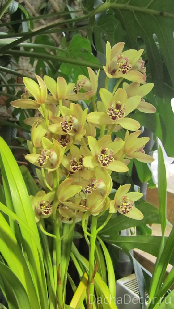 История происхождения орхидеи