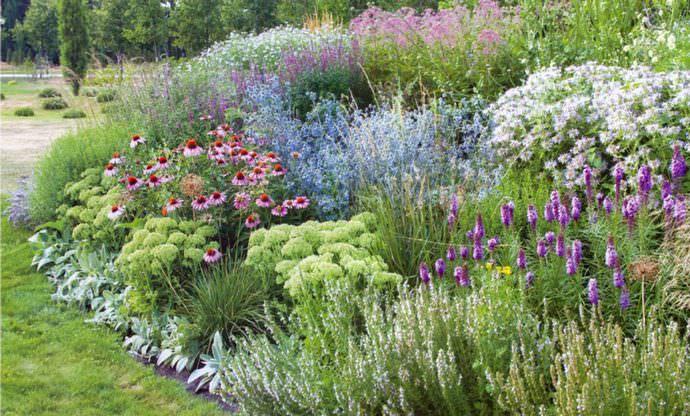 Для маленького миксбордера используют около 10 видов растений