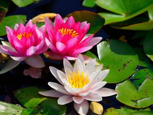 Растения у пруда