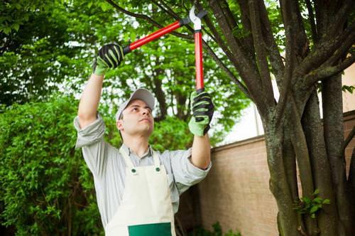 Технология и особенности весенней и осенней обрезки деревьев в саду