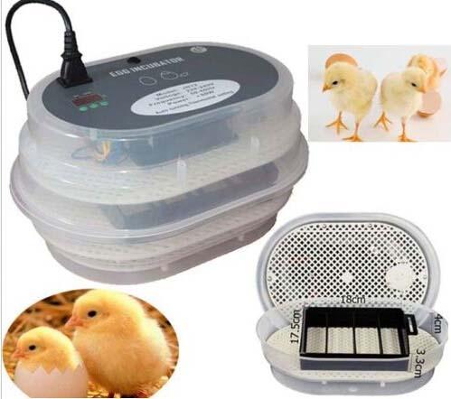 Инкубаторы для куриных яиц: обзор существующих видов и особенности изготовления своими руками