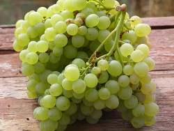 Сорт винограда Русбол: фото описание, отзывы