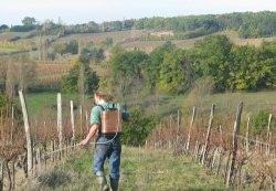 Как обрабатывать виноград весной
