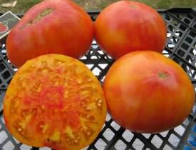 Посевы томатов и перцев на рассаду
