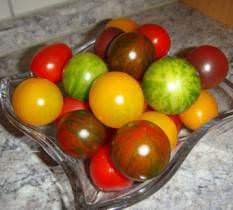 Лучшие сорта томат для теплиц