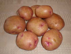 Картофель Снегирь (описание сорта, отзывы)