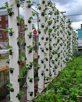 Как экономно использовать место на огороде