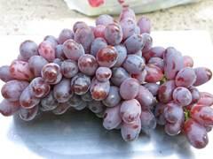 Виноград Шахиня Ирана