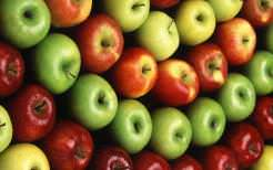 Осенние сорта яблонь для средней полосы (25 фото)