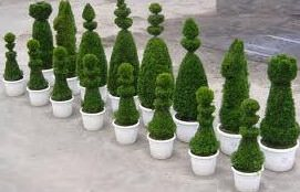 Декоративная стрижка деревьев и кустарников