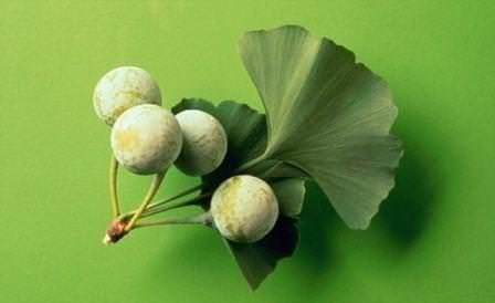 История растения