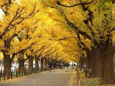 Где растет реликтовое дерево