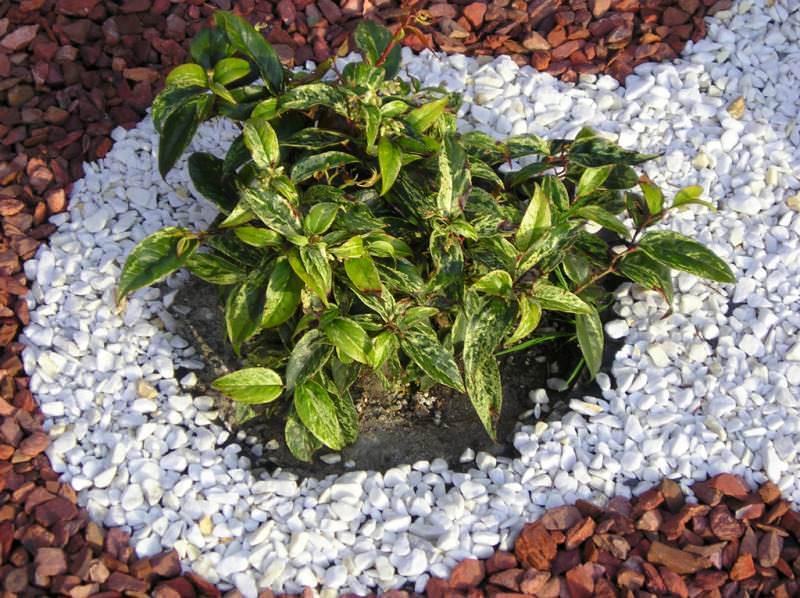 Высадку растений начинают с кустарников, когда они пойдут в рост, можно будет высаживать ковровые и многолетние растения