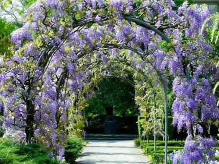 Арки и опоры должны быть прочными, ведь лиана с цветами достигает значительной массы