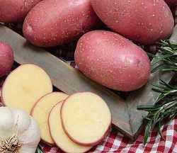 Картофель Удача: описание, сорта, отзывы