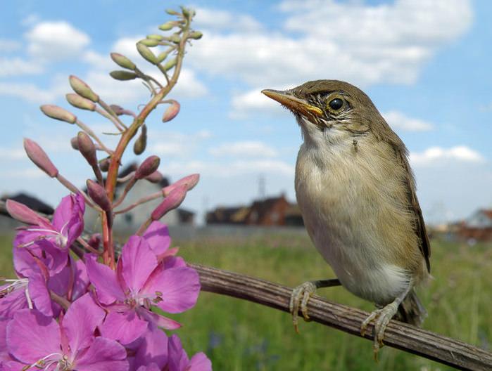 Вредные насекомые сада и огорода (10 фото)
