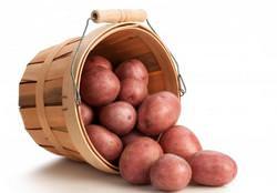 Какой состав грунта предпочитает картофель