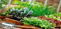 Почему зелень плохо растет на подоконнике