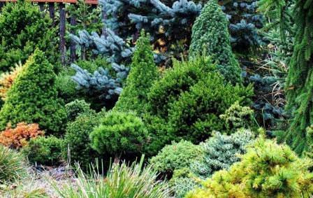 Карликовые растения