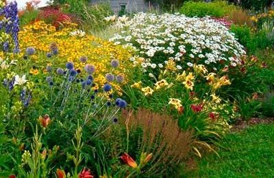 Схема цветущей клумбы с весны до осени